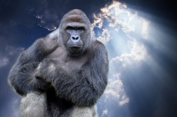 27-harambe-gorilla-heaven.w710.h473.2x[1].jpg